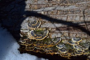 Tree trunk with mushrooms